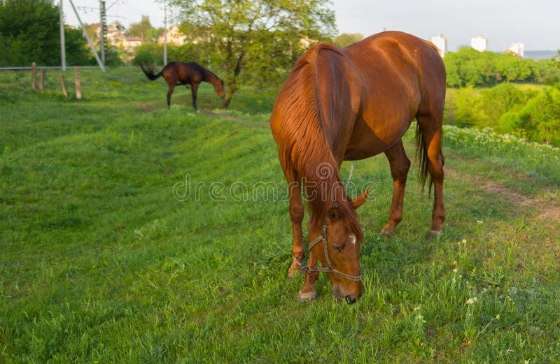 Horses on a spring pasture stock photography