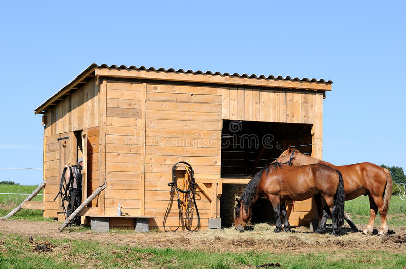 Horses stable. Two horses in the stable royalty free stock images