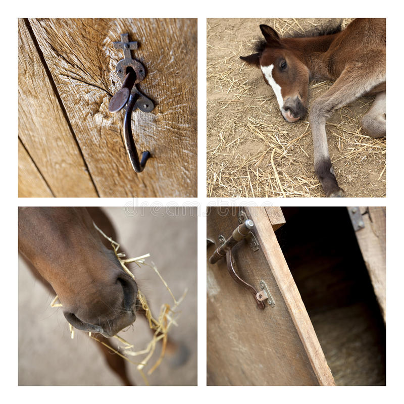 Download Horses in the stable stock photo. Image of mammal, riding - 23875820