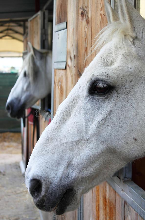 Download Horses In Stables Stock Photography - Image: 20047072