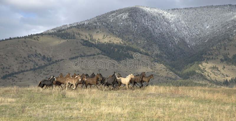 Download Horses stampede stock image. Image of stampede, outdoors - 5673777