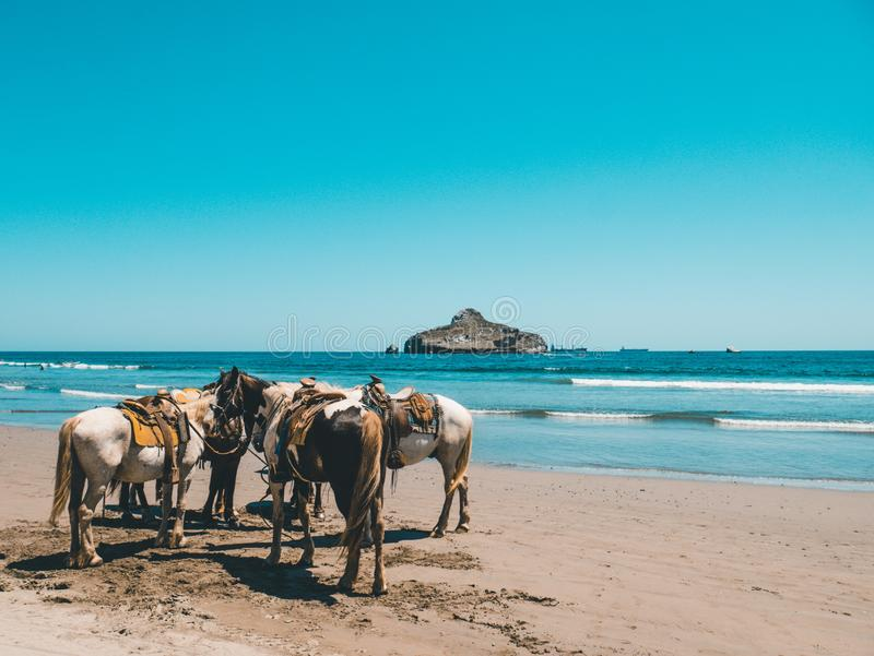 Horses standing by the beach next to the clear blue sea and a mountain in the background stock photography