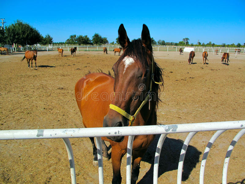 Download Horses in Stud Farm stock image. Image of farm, mare - 20826853