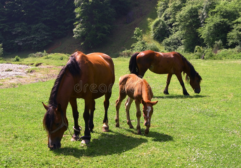Download Horses on a sunny day stock photo. Image of fresh, young - 1714882