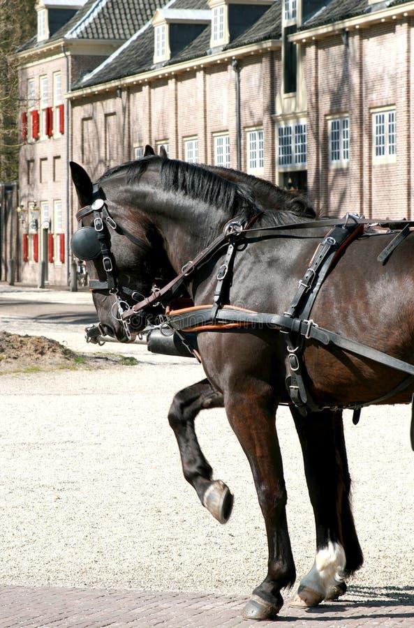 Horses ( t Loo Palace)