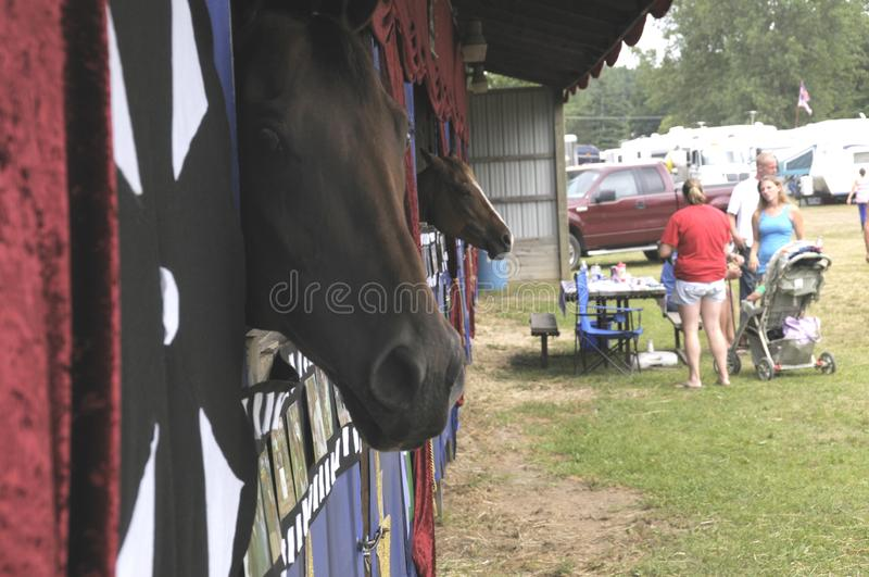 Horses in its stall in Belleville, Michigan stock image