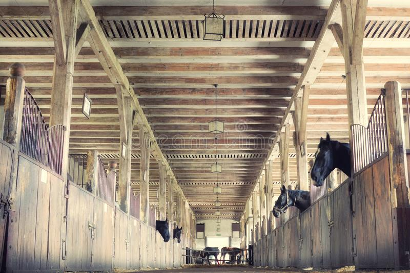 Horses in their stalls, high noise, vintage effect royalty free stock image