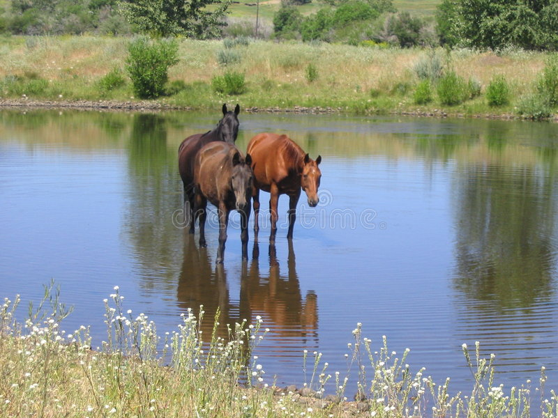 Horses by Three royalty free stock photography