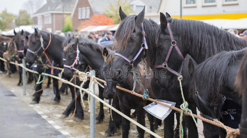 Horses to be sold on a Dutch market royalty free stock images