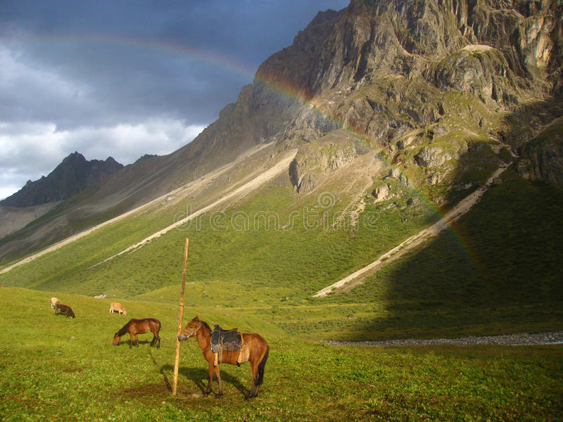Horses Under The Rainbow Stock Photo