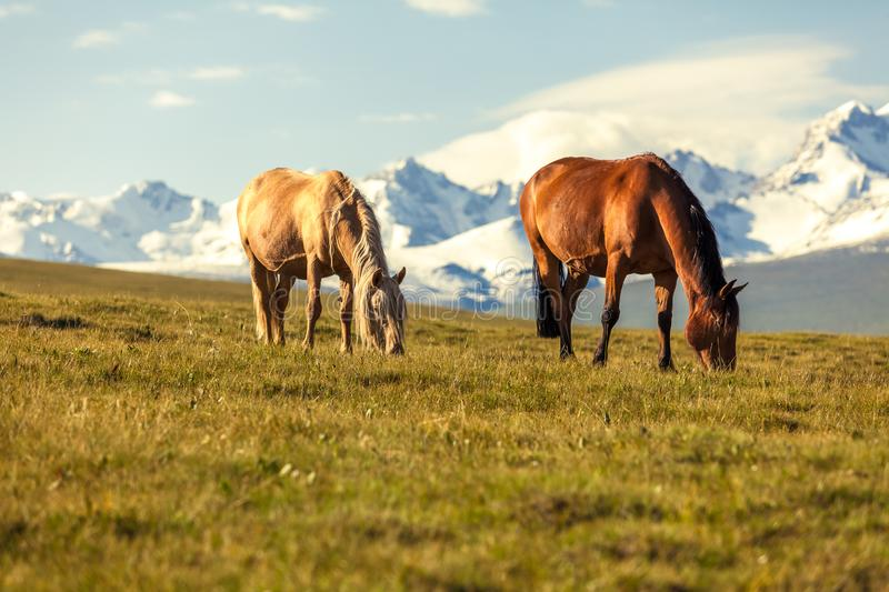The horse under snow mountains royalty free stock photography