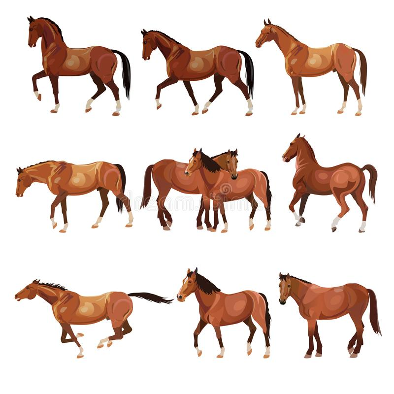 Horses in various poses royalty free illustration