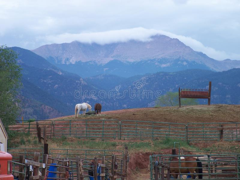 Horses with a view of the Rockies stock photos