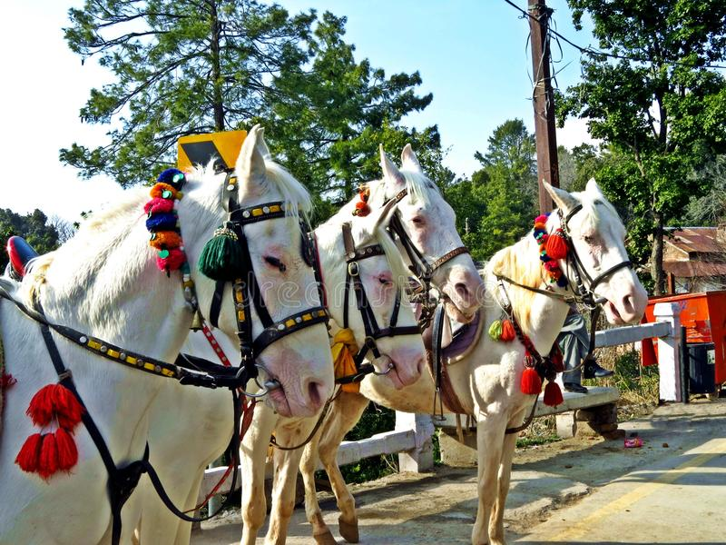 horses waiting for tourist, Murree, Pakistan royalty free stock photos