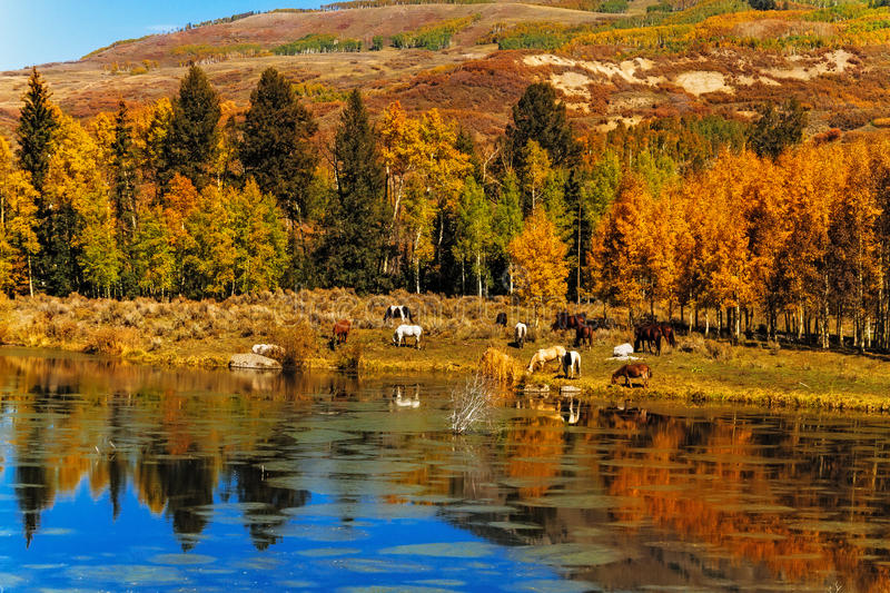 Download Horses by Water in Fall stock photo. Image of colorado - 37688346