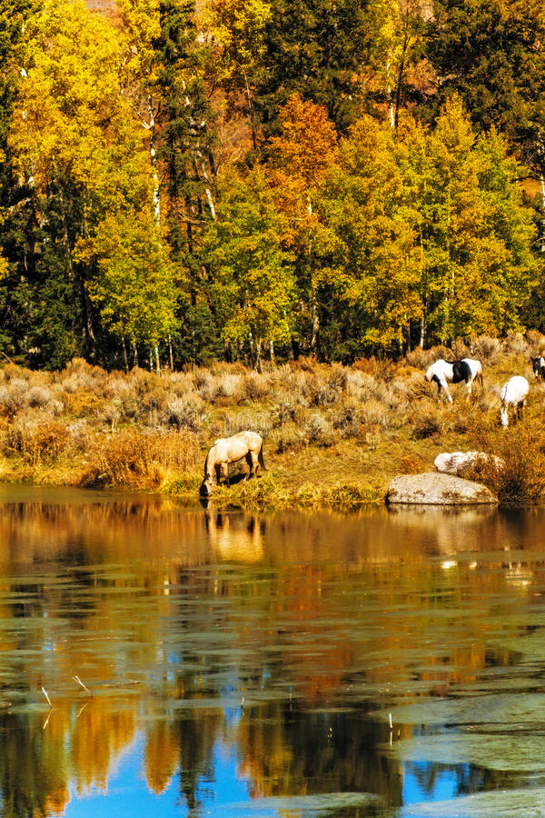 Download Horses by Water in Fall stock photo. Image of leaves - 37688382