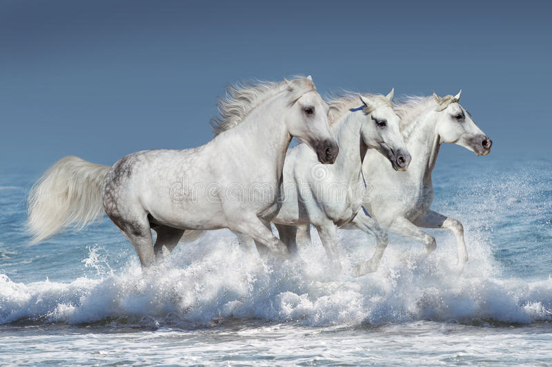 Horses in water royalty free stock photo