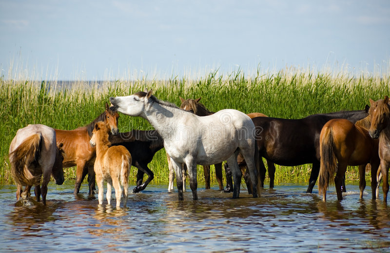 Download Horses On The Watering. Stock Photography - Image: 2737552