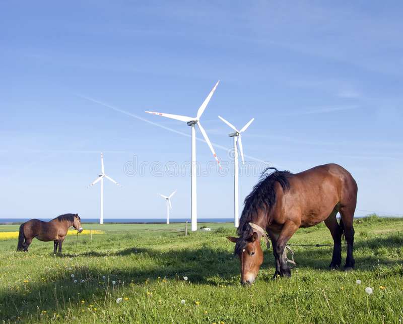 Download Horses and wind turbines stock image. Image of brown, green - 5165089