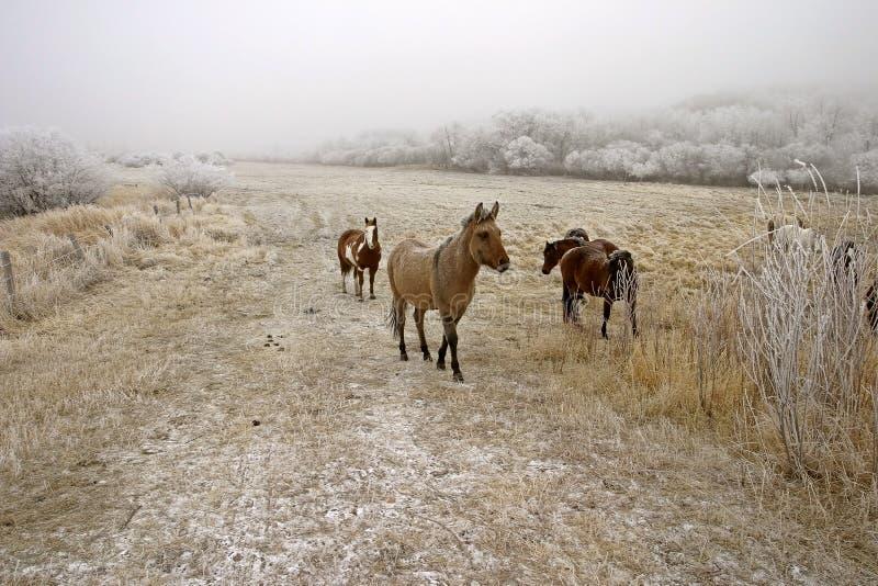 Horses in winter royalty free stock photos