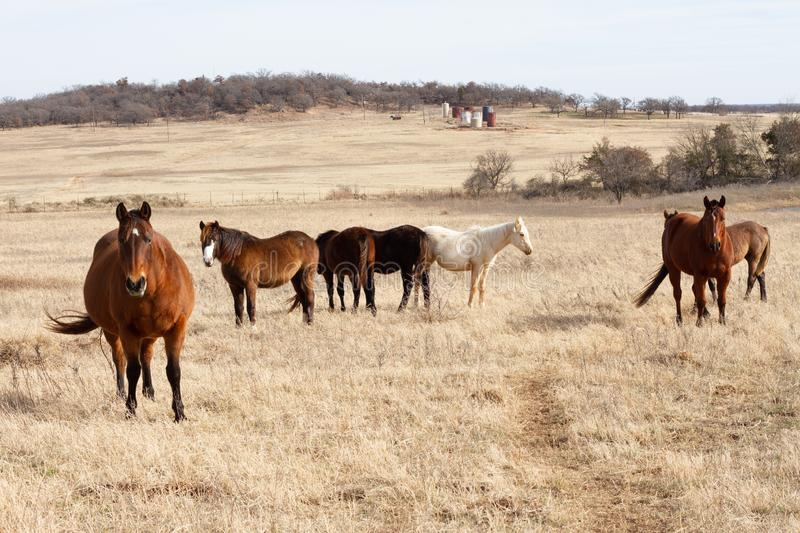 Horses in winter pasture royalty free stock photo