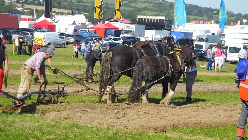 Horses working the National Ploughing Championships Co Carlow Ireland on 19th September 2019. Horses working at the National Ploughing Championships Co Carlow royalty free stock photo