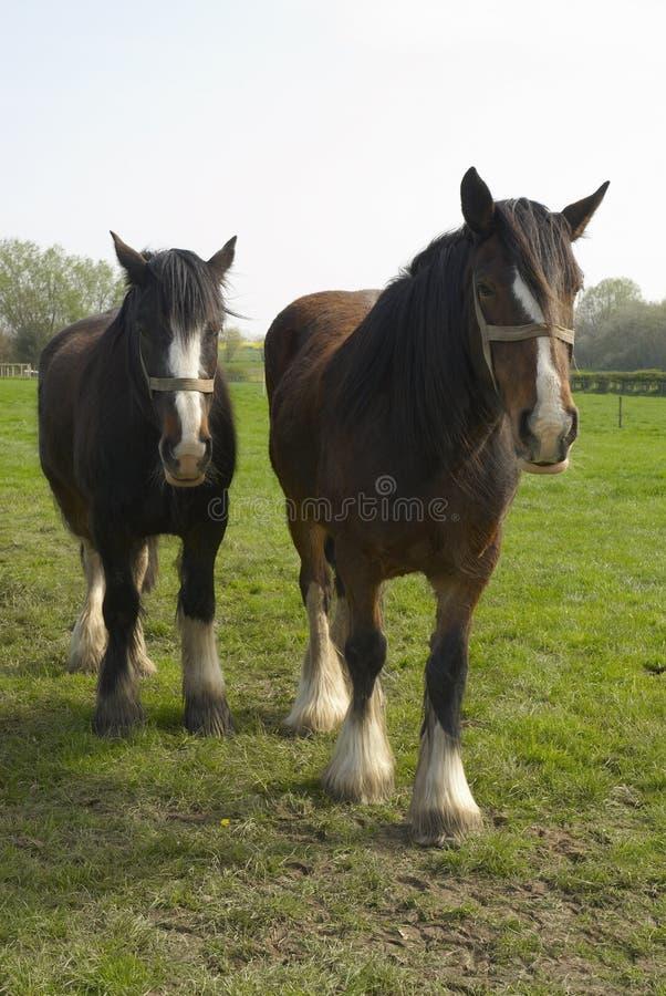 horses50郡 免版税图库摄影