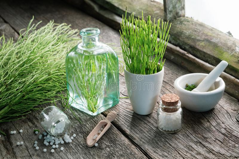 Horsetail healing herbs, bottle of equisetum infusion, mortar and bottles of homeopathic globules. royalty free stock images