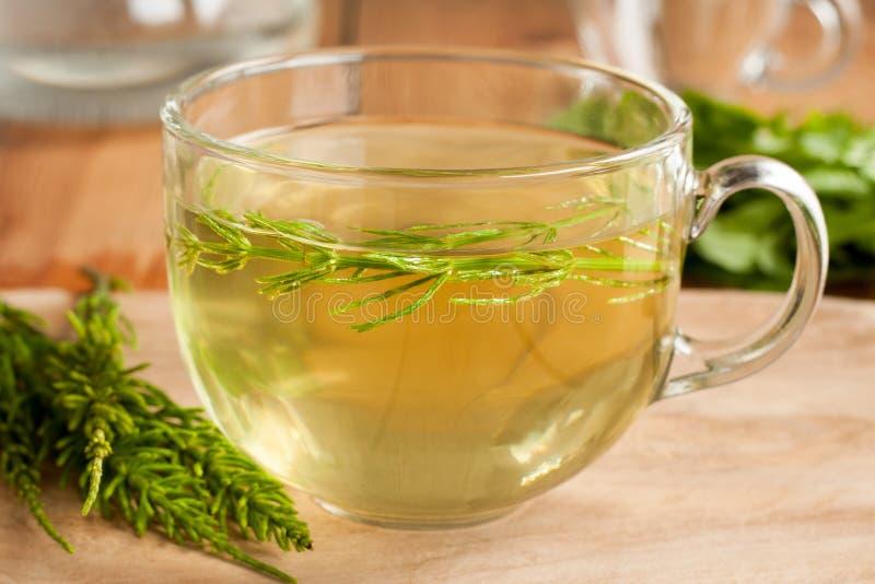 Horsetail herbata robić od świeżego horsetail zdjęcie royalty free