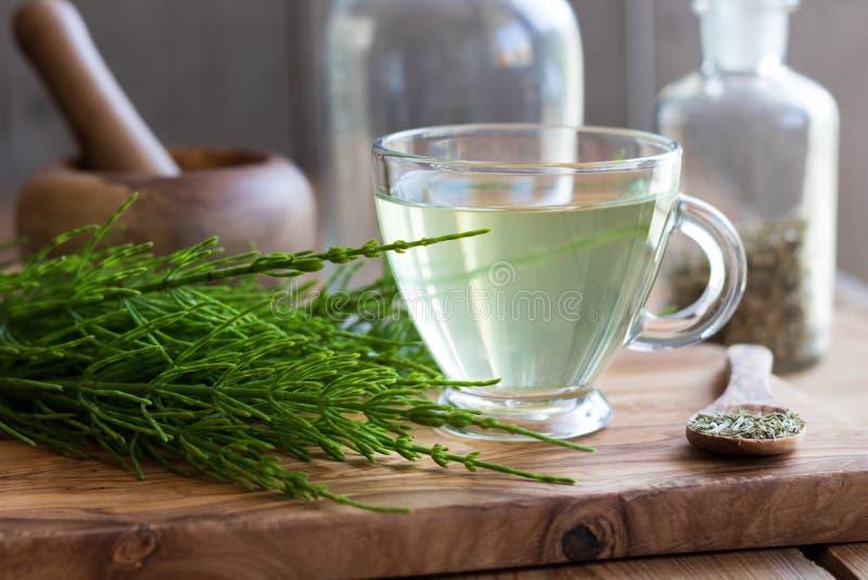 Horsetail herbata z świeżym i wysuszonym horsetail fotografia royalty free