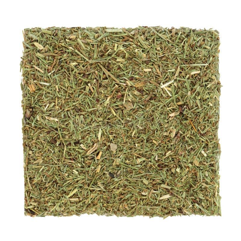 Horsetail liścia ziele zdjęcia stock