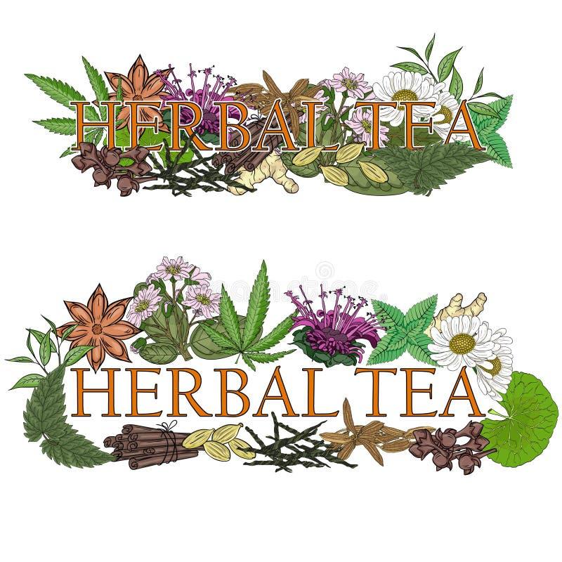 Horsetailinfusion in einem Glascup Illustration des Namens mit Blumen und Blättern für ein t lizenzfreie abbildung