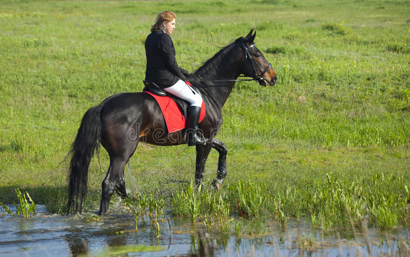 Horsewoman. And her horse / spray water royalty free stock photography