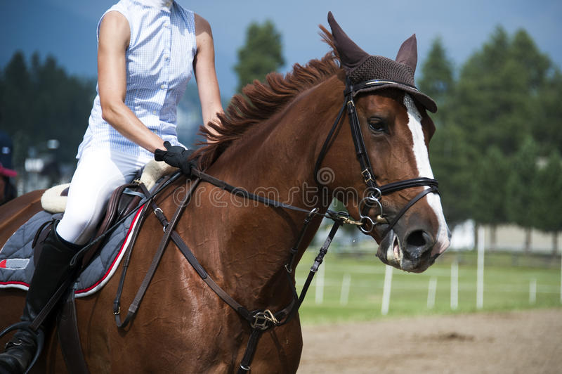 Horsewoman. At a jumping show stock image