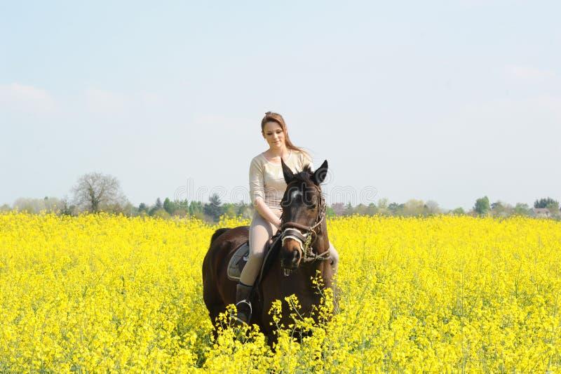 horsewoman royaltyfri fotografi