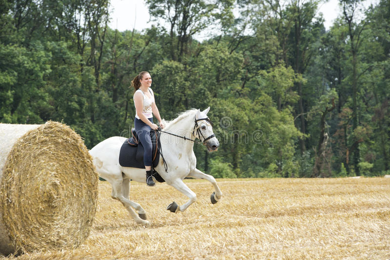 Horsewoman galloping. Young woman on white horseback riding over stubblefield royalty free stock photo