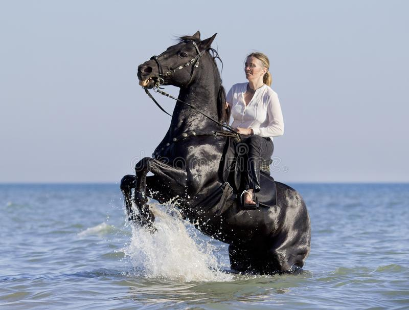 Horsewoman in the sea. Horsewoman and her horse in the sea royalty free stock photo