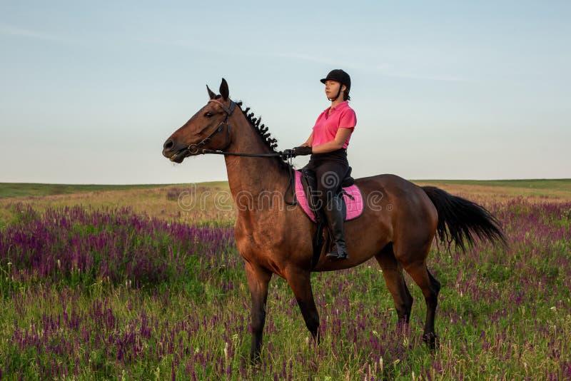 Horsewoman jockey in uniform riding horse outdoors royalty free stock photos