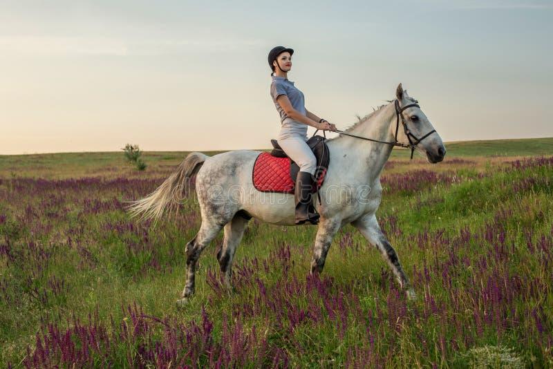 Horsewoman jockey in uniform riding horse outdoors. Sunset. Horseback Riding. Competition. Hobby royalty free stock image