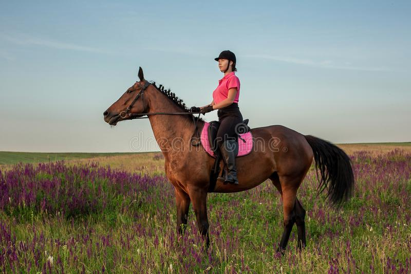 Horsewoman jockey in uniform riding horse outdoors. Sunset. Horseback Riding. Competition. Hobby royalty free stock photo