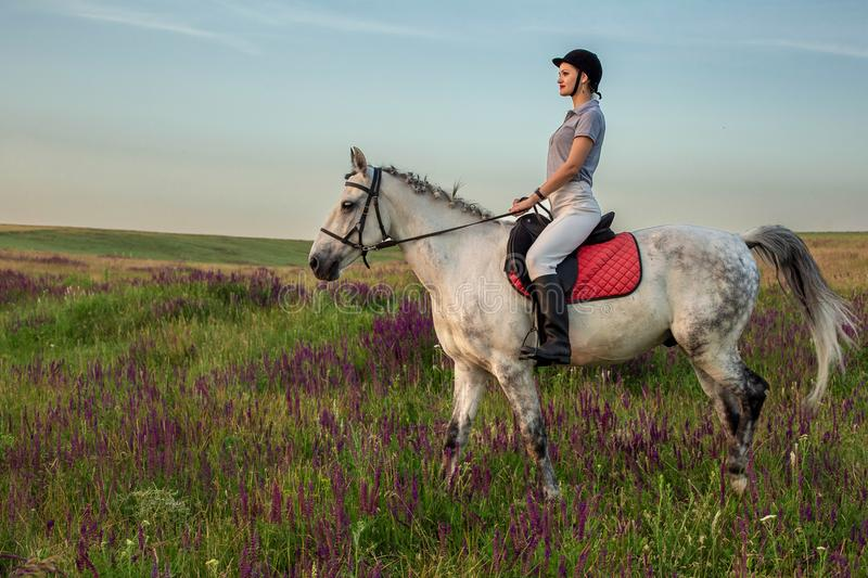 Horsewoman jockey in uniform riding horse outdoors stock photography