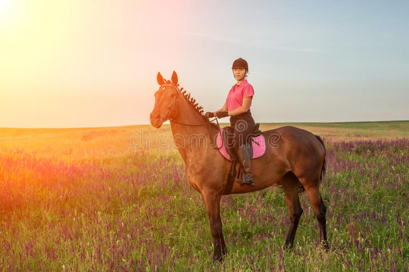 Horsewoman jockey in uniform riding horse outdoors stock image