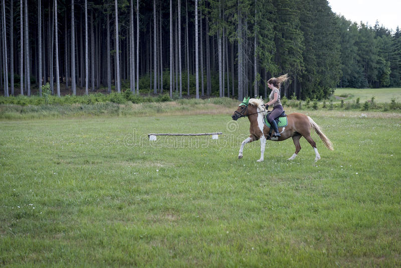 Horsewoman on a meadow near the forest. In czech republik royalty free stock image