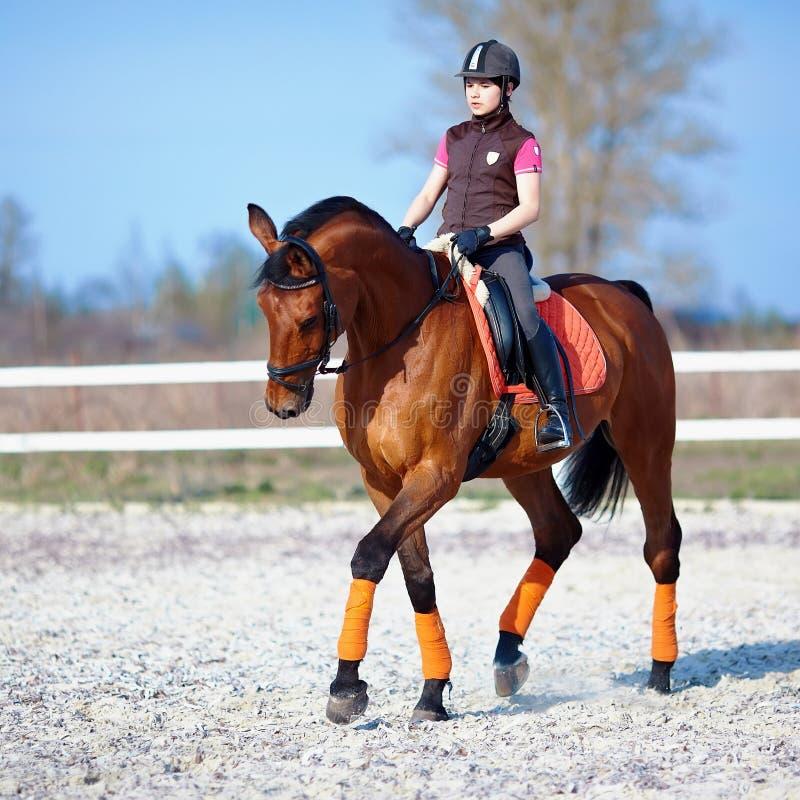 Horsewoman na czerwonym koniu zdjęcie royalty free