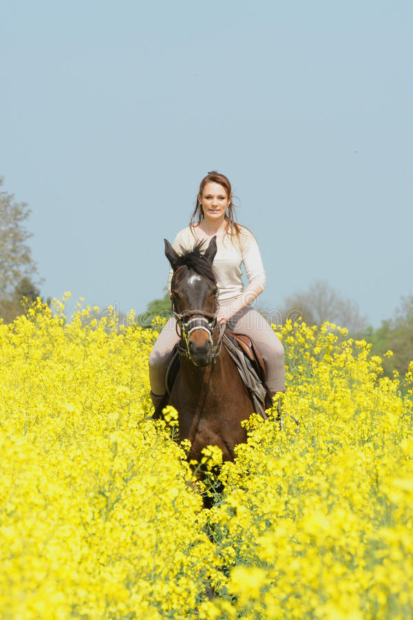 Horsewoman. Rider on horseback in the snow stock photo