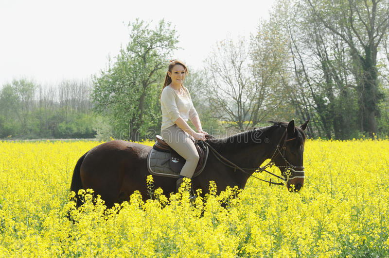Horsewoman. Rider on horseback in the snow royalty free stock image