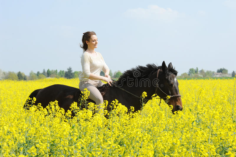 Horsewoman. Rider on horseback in the snow royalty free stock photos