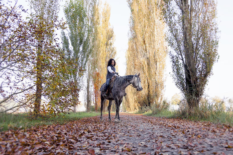 Horsewoman rides his horse to the country. Roads in autumn stock images