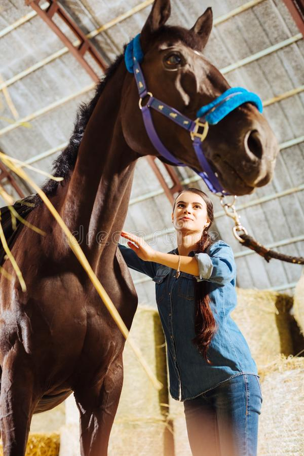 Horsewoman smiling broadly while cleaning her big dark horse. Big dark horse. Appealing caring horsewoman smiling broadly while cleaning her big dark horse stock photos