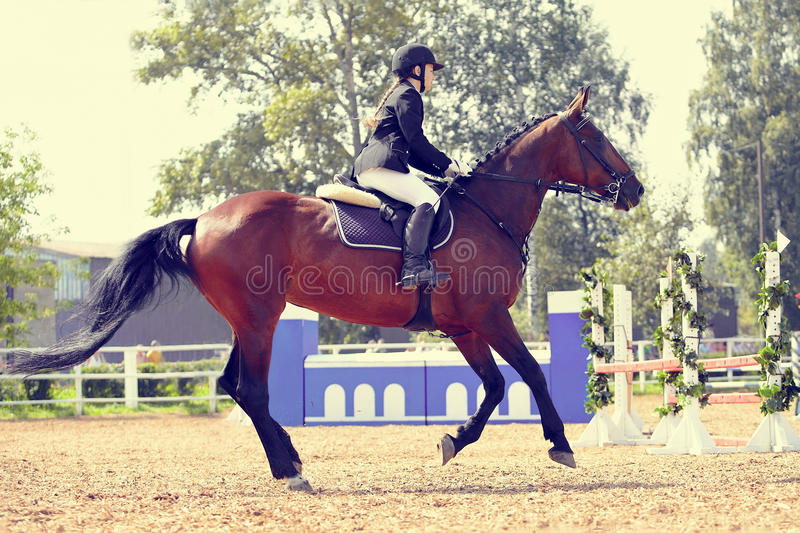 The horsewoman on a sports horse at competitions. The sportswoman on a sports red horse at competitions stock photos